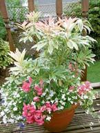 gardening-gallery-2